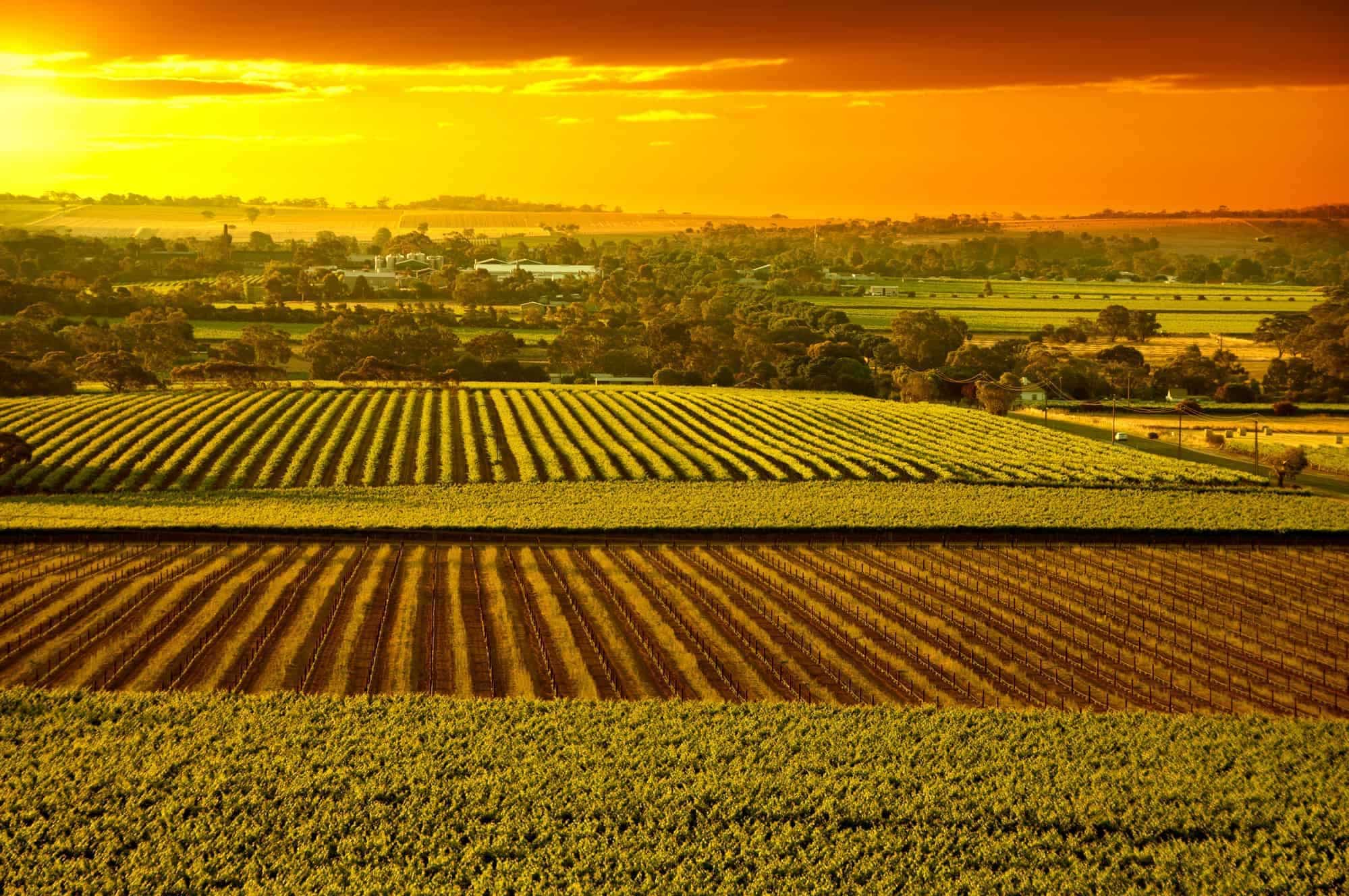 Barossa Valley vineyards South Australia