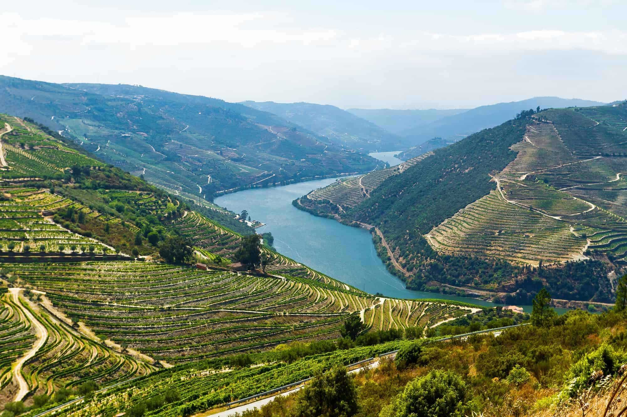 Wine fields almost dipping the toes into the Douro floden