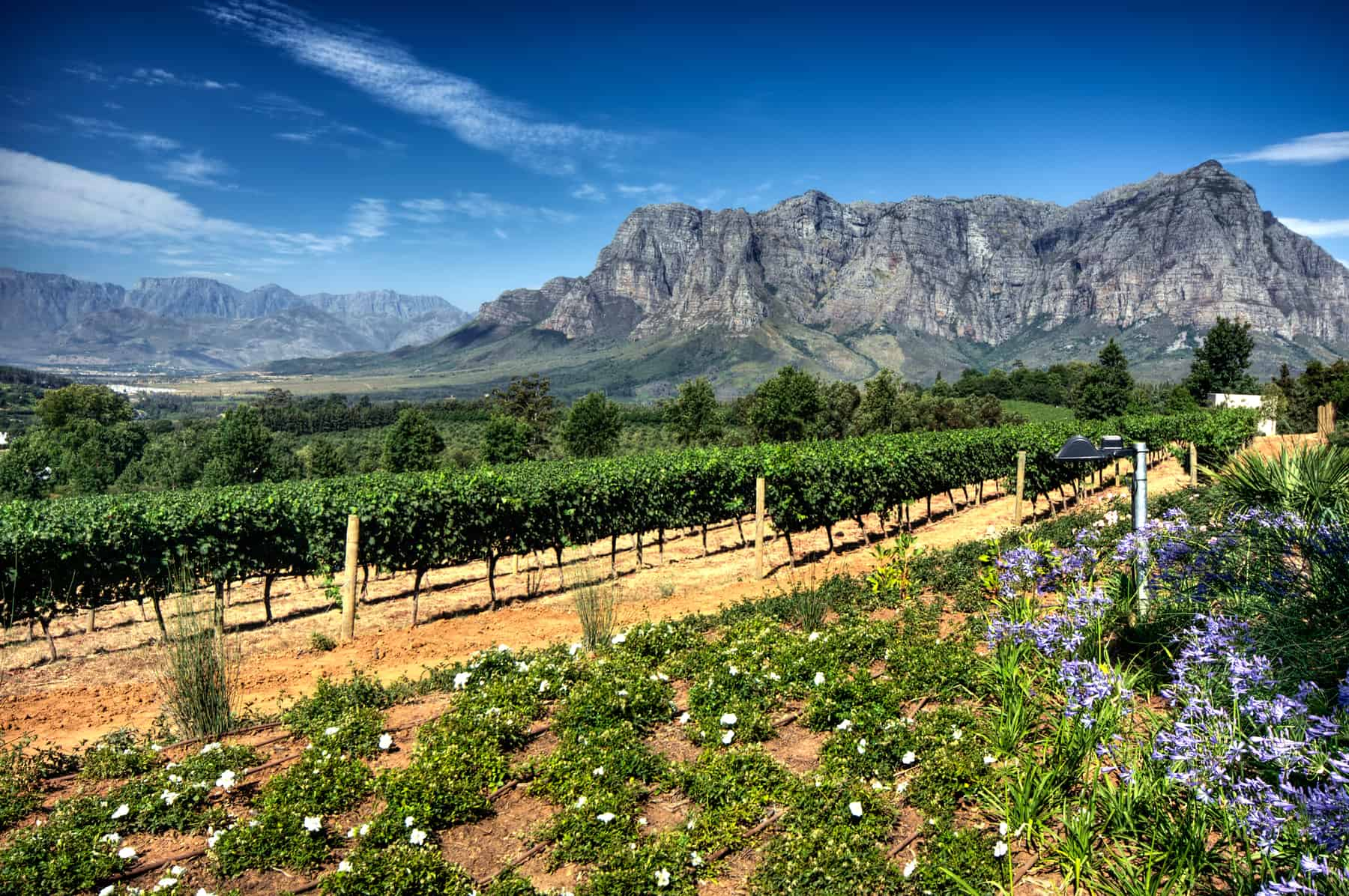 This sign marks the beginning of the new Stellenbosch American Express Wine Routes that represent more than 200 wine and grape producers within the boundaries of the Stellenbosch Wine of Origin classification. The Wine Route is divided into five sub-routes, Stellenbosch, South Africa