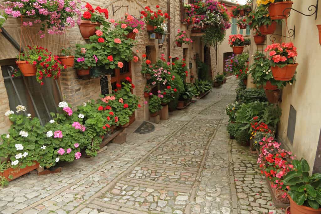 old paved street with incredible many flowers in little town Spello, Umbria, Italy